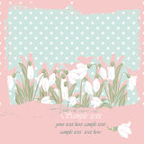 Snowdrop flowers Blossom spring card Royalty Free Stock Photography