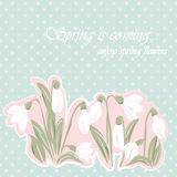 Snowdrop flowers Blossom spring card Stock Images