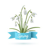 Snowdrop flowers with blue ribbon. Royalty Free Stock Photography