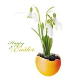 Snowdrop Flowers Easter Greeting Stock Photos