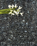 Snowdrop flowers on emerald pearl granite worktop. Snowdrops on emerald pearl granite stone countertop, spring concept Royalty Free Stock Images