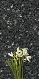 Snowdrop flowers on emerald pearl granite worktop. Snowdrops on emerald pearl granite stone countertop, spring concept Stock Photo