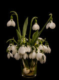 Snowdrop flowers in a glass vase Royalty Free Stock Photos