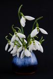 Snowdrop flowers in vase Royalty Free Stock Images