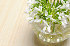 Snowdrop flowers in vase Royalty Free Stock Photography