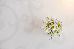 Snowdrop flowers at vase on white glossiness background with orn Royalty Free Stock Photography
