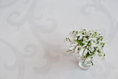 Snowdrop flowers at vase on white glossiness background with orn Stock Image