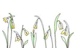 Snowdrop flowers watercolor sketch Royalty Free Stock Image