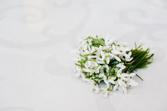 Snowdrop flowers at white glossiness background Royalty Free Stock Images