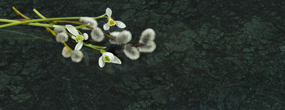 Snowdrop flowers and willow branches on Verde Guatemala marble s. Tone countertop, spring concept Stock Photo