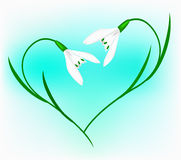 Snowdrop in the form of heart Stock Photography