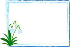 Snowdrop in Frame. Illustration of Snowdrop flower in abstract frame on the white background Royalty Free Stock Photo