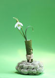 Snowdrop. On green background, easter decoration royalty free stock image