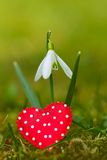 Snowdrop with heart Stock Image