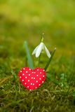 Snowdrop with heart Royalty Free Stock Image