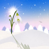 Snowdrop. Illustration of snowdrop in the snow Stock Images