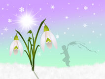 Snowdrop. Illustration of snowdrop in the snow Royalty Free Stock Image