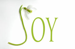 Snowdrop and letters - JOY stock photos