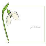 Snowdrop minimal card Stock Photos