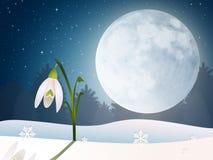 Snowdrop in the moonlight Stock Photo
