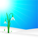 Snowdrop in nature on the sky Royalty Free Stock Photos