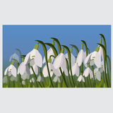 Snowdrop pattern Stock Photography