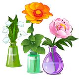 Snowdrop, peonies and zinnias in glass vases Stock Image