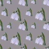 Snowdrop seamless pattern Stock Image