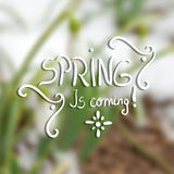 Snowdrop spring flower with snow Stock Images