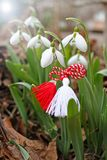 Snowdrop spring flowers with martenitsa. Baba Marta day stock photography