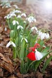 Snowdrop spring flowers with martenitsa. Baba Marta day stock photos