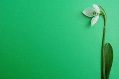 Snowdrop su priorità bassa verde Fotografie Stock