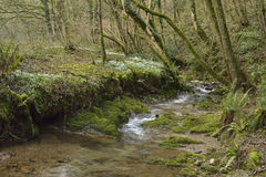 Snowdrop Valley Royalty Free Stock Photo