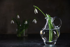 Snowdrop in vase of glass  against a dark wall, copy space Royalty Free Stock Images