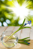 Snowdrop in a vase on a wooden table Stock Image