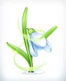Snowdrop vector icon Stock Photo