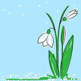 Snowdrop. Vector illustration of a hand drawn snowdrop on a light blue background Stock Images