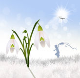 Snowdrop in winter Royalty Free Stock Photography