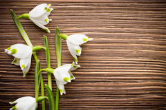 Snowdrop. Snowdrop on the wooden background royalty free stock image