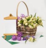 Snowdrops和番红花在篮子。 图库摄影