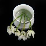 Snowdrops特写镜头在花瓶的 库存照片