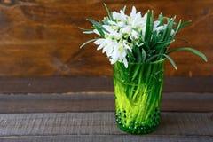 Snowdrops белых цветков Стоковая Фотография RF