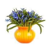 snowdrops красивейших голубых цветков свежие естественные Стоковое Изображение RF