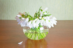 Snowdrops. Bouquet of snowdrops standing on a table in  glass vase. Still life Royalty Free Stock Photos