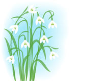 Snowdrops. Royalty Free Stock Photos