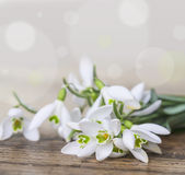 Snowdrops. Close up in detail stock image