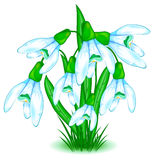 Snowdrops. Brush of snowdrops, first spring flowers in blue and green Royalty Free Stock Images