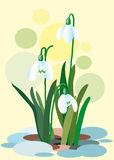 Snowdrops on a abstract background. Spring illustration. Illustration of flowers. Spring. Vector. Illustration stock illustration