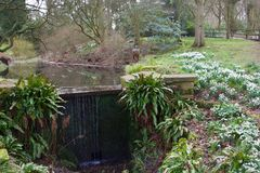 Free Snowdrops And The Pond Stock Photos - 140616703