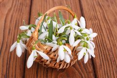 Snowdrops in a basket from a rod against Stock Images